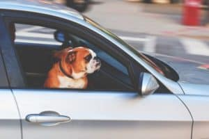 Distracted Driving caused by Pets